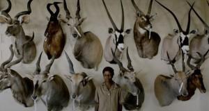 safari_film