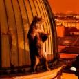 Un oggetto non identificato è apparso a Berlino, Casanova Gene di Luise Donschen è un film straniante e seducente che prende il titolo dal nome del Casanova, il grande seduttore […]